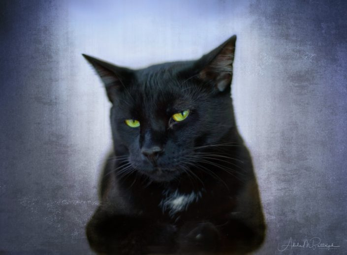 The expressive look of a black cat. © Adele M. Buttolph, © Adele Buttolph. adelembuttolphgallery, adelembuttolphphotography