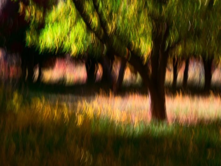 Impressionistic photograph of autumn apple orchard, Fruita, Capital Reef National Park, Utah. © Adele M. Buttolph, © Adele Buttolph, adelembuttolphgallery, adelembuttolphphotography