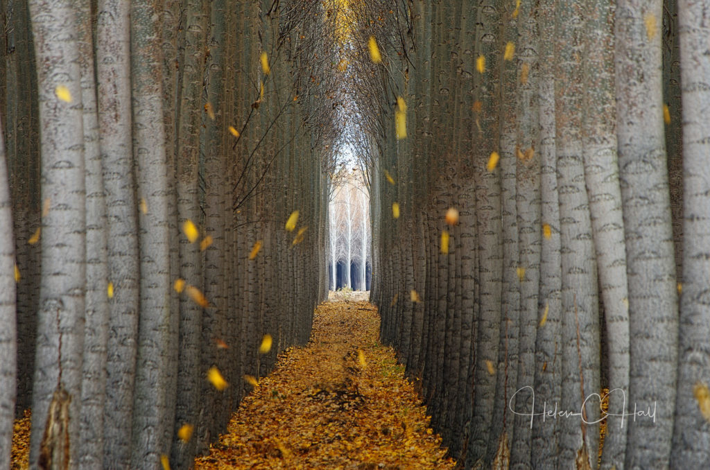 Cathedral, Boardman Tree Farm, Boardman, Oregon. ©Helen C Hall