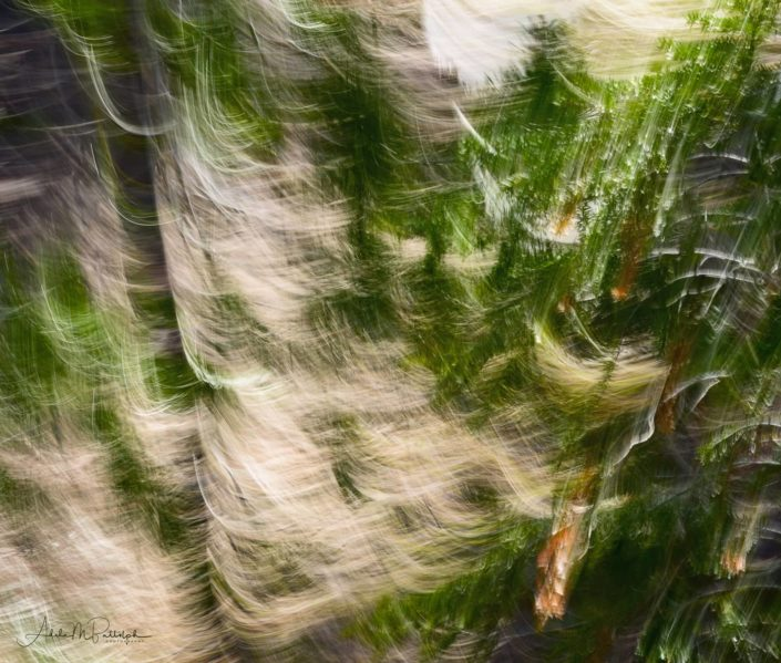 An abstract image of a Pacific Northwest forest scene located near Mt Hood in the Cascades, Oregon