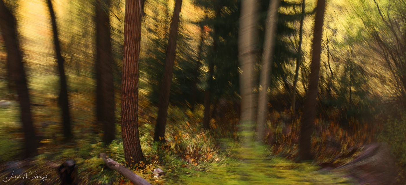 Abstract photograph of a forest in Colorado shot during the autumn from a moveing train.