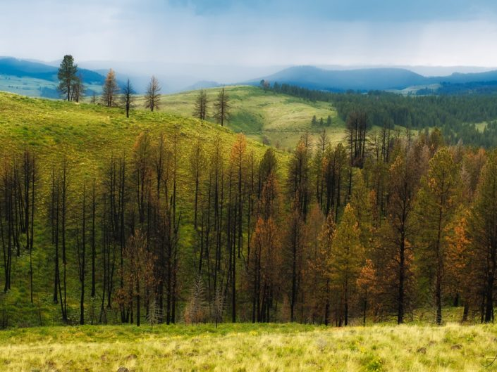 Landscape photograph of Wallowa Mountain foothills in Baker County near Halfway, Oregon. Shot during a spring storm. Forground of burned forest receding into lush, green hillsides.