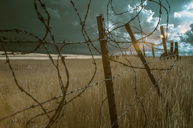 Infrared photo of a barb wire fence shot in infrared on the Zumwalt Prairie, Oregon.