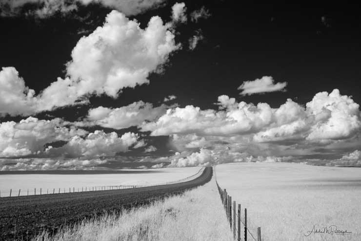 Zumwalt Road provides a leading line for this infrared photograph of the Zumwalt Prairie.