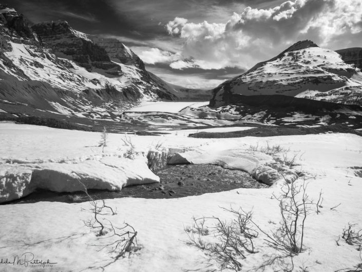 Black and white infrared photograph of the Columbia Glacier located in Jasper National Park, Alberta, Canada
