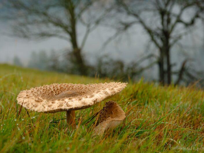 Mushrooms Czech Republic